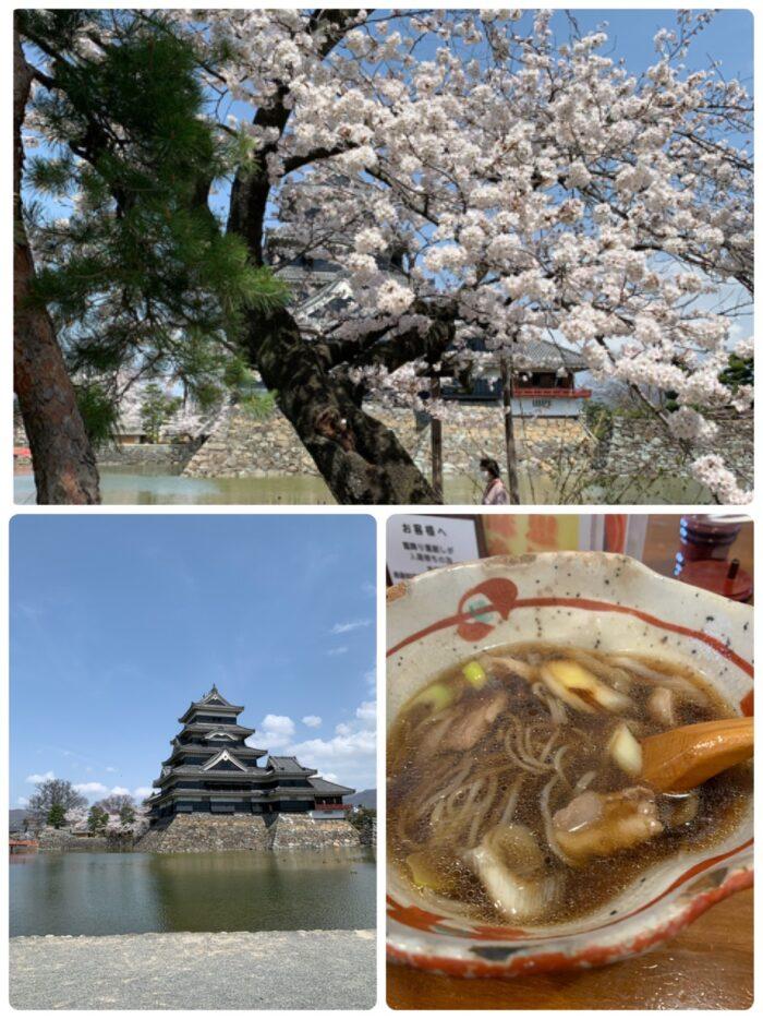松本城-桜-20210411